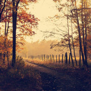 Herfst, foto: Lukasz Szmigiel via Unsplash